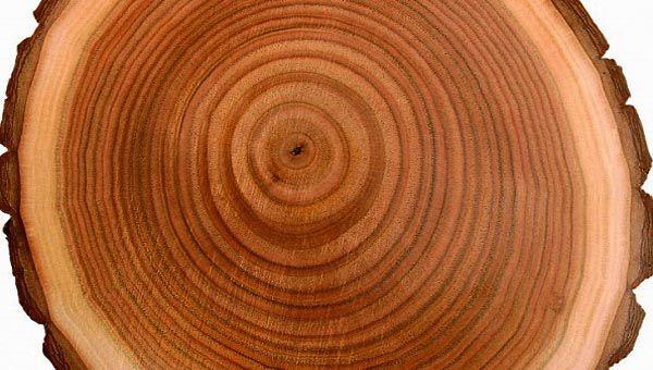 Vân gỗ là gì? Có nên sử dụng cửa thép vân gỗ hay không?